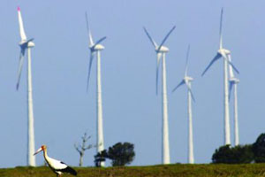 brazilian-wind-power