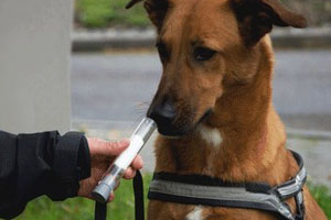 sniffer-dogs