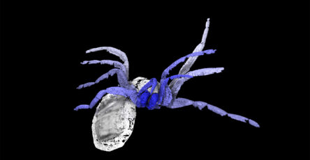 Spiders-fossil